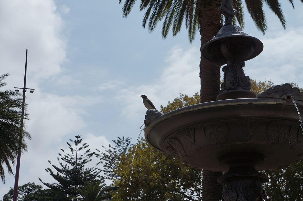 Vogel auf Brunnen